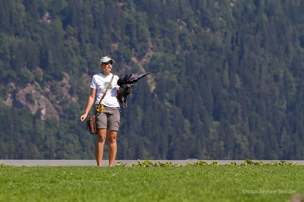 Adlerflugschau Burgruine Landskron